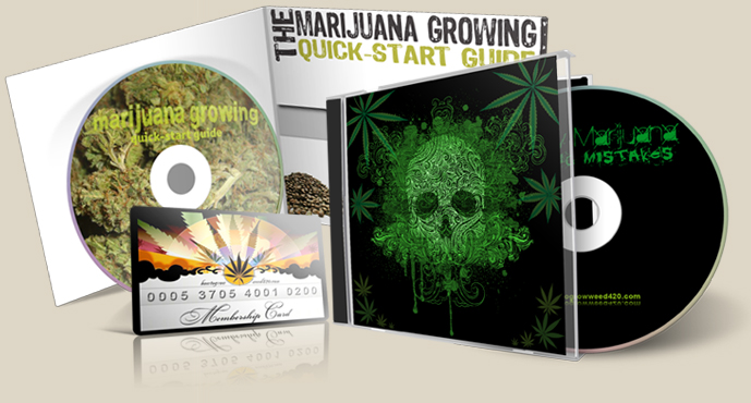 growing elite marijuana