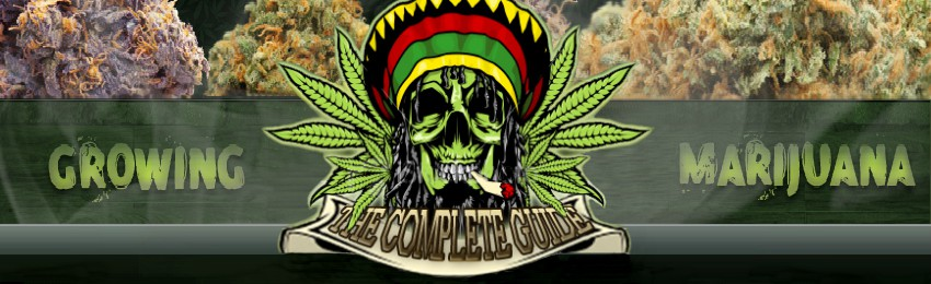 How To Grow Weed 420 Coupons and Promo Code