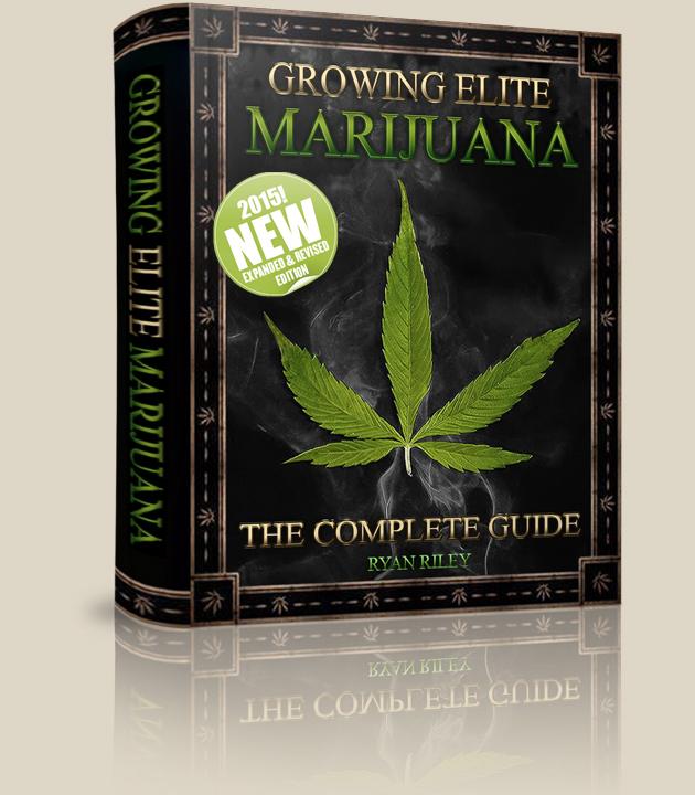 step by step marijuana grow guide