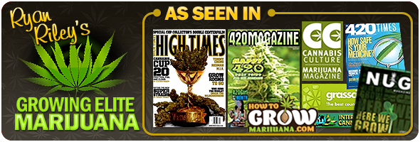 grow medical marijuana