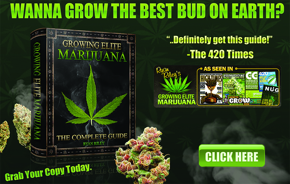 cannabis growing guide banner