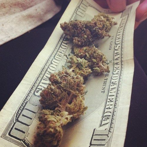 weed marijuana grow ryan riley