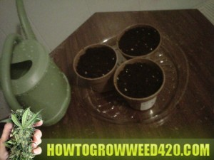 how tough grow weed onside guide