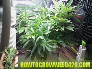 Trim your pot plant
