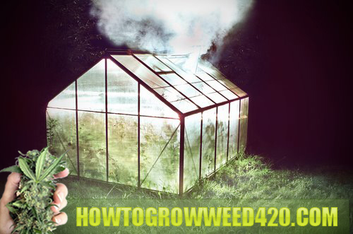 Spot to grow weed