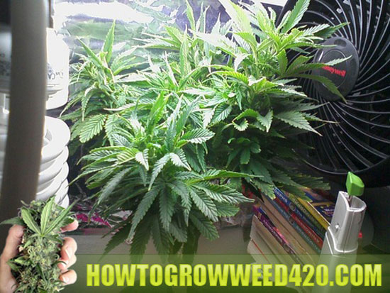 Grow weed indoors advice tips