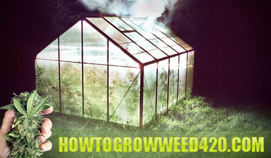 Tips for growing pot outside