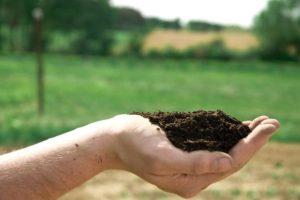 organic-marijuana-potting-soil-ryan-riley