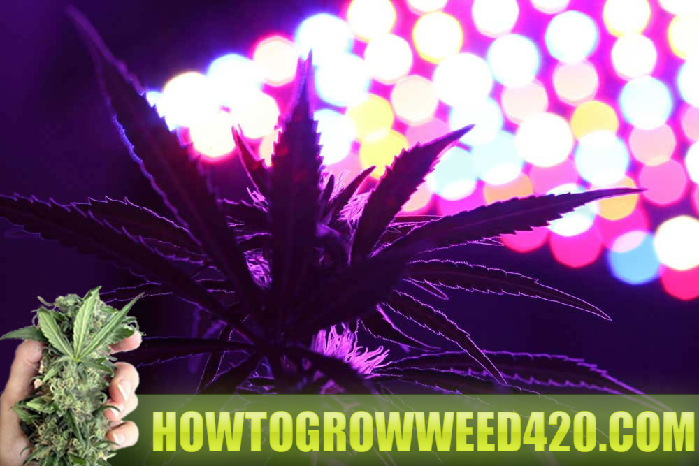 LED grow lights best reviews for growing marijuana vs HID.