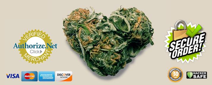 order cannabis seeds online
